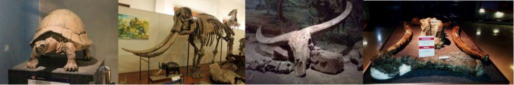 fosildiMuseumSangiran