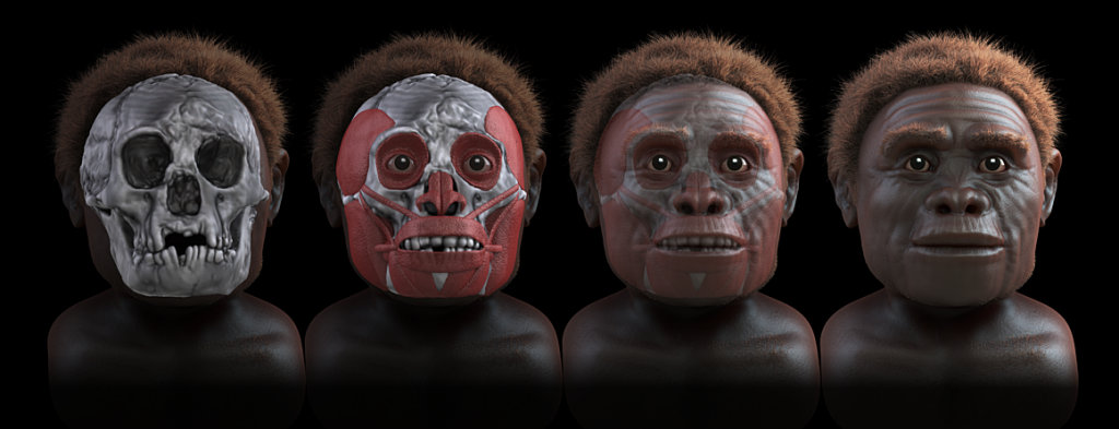 homo floresiensis   steps of forensic facial reconstruction