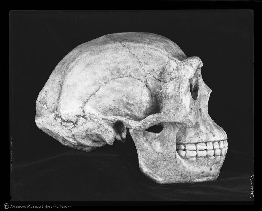 SinanthropusPekinensis