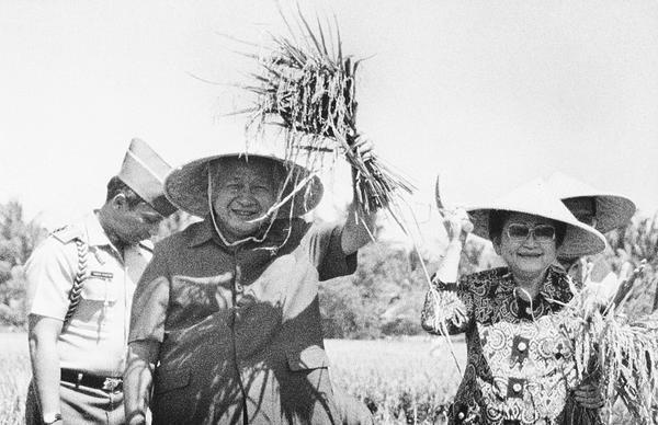 Soeharto picks rice