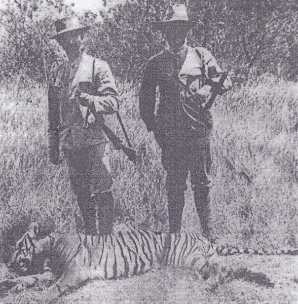 Harimau Bali 1