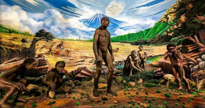 Penelitian manusia purba di Indonesia 696x367 1