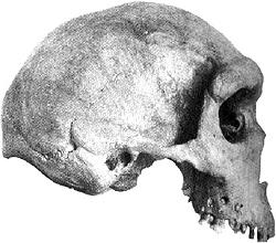 homo rhodesiensis 1
