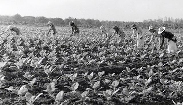 787130529 Plantation Workers 1938.large